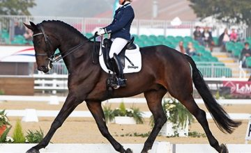 brush up your dressage skills