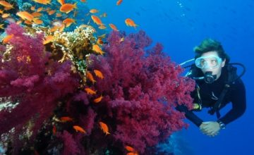 win a red sea diving holiday